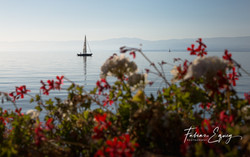 Sail boat from Lutry, Switzerland