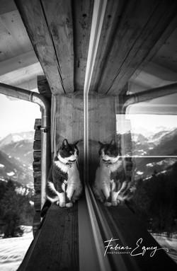 Mirror Cat.