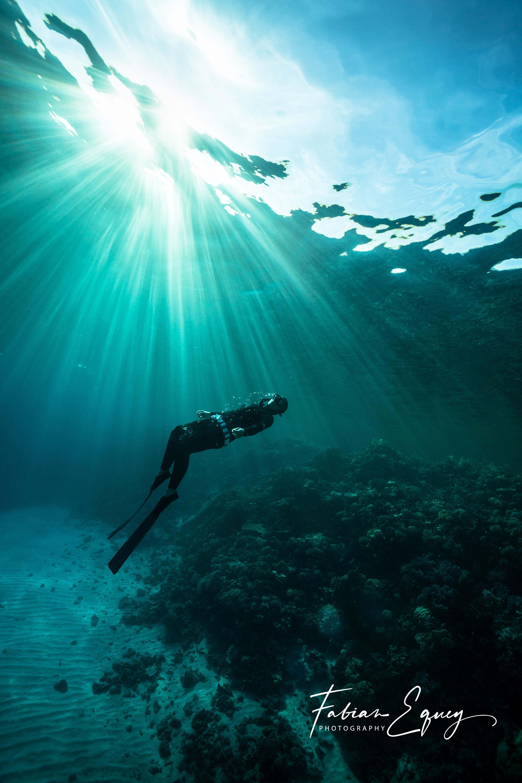 Freediver: Gogo