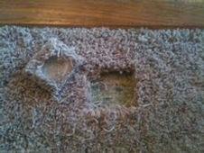 Image Carpet Patch Repair