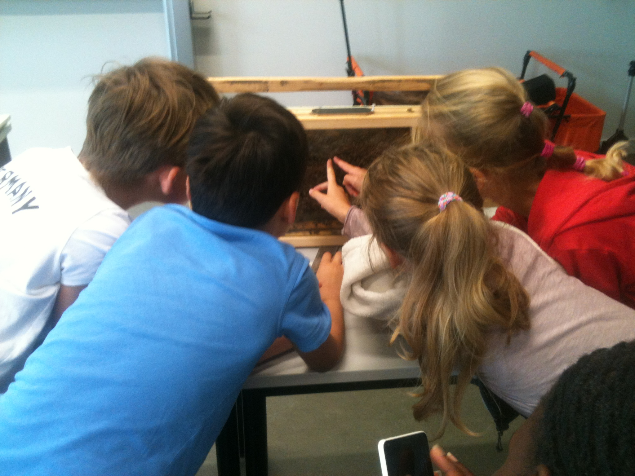 Kinder erforschen Bienenvolk