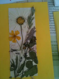 Blumenbild