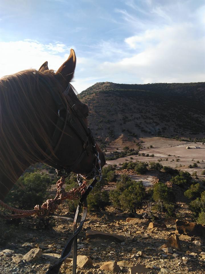 Rando à cheval d'Agadir à Essaouira