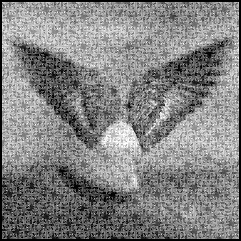 Grey Pigeon,  2010