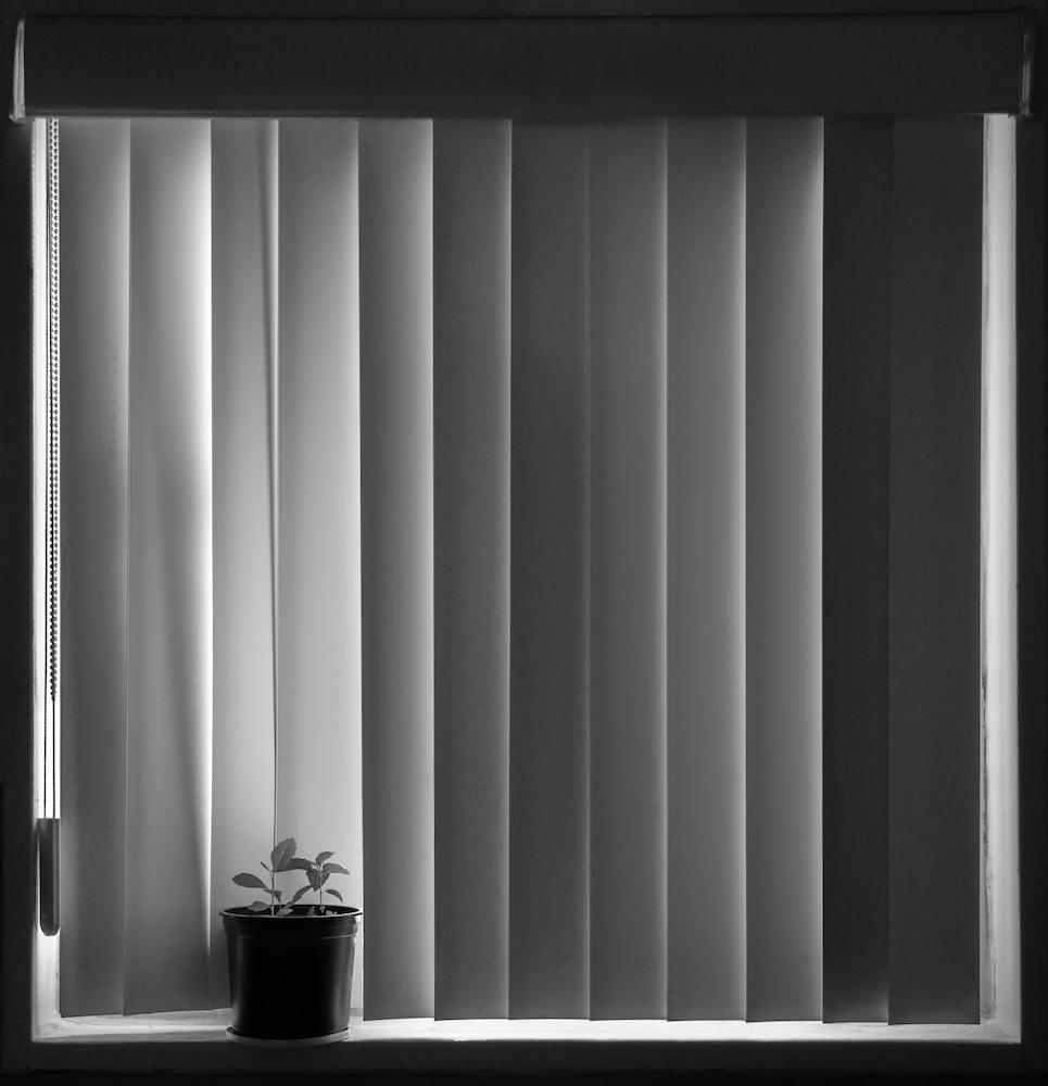 Kipling Street Window
