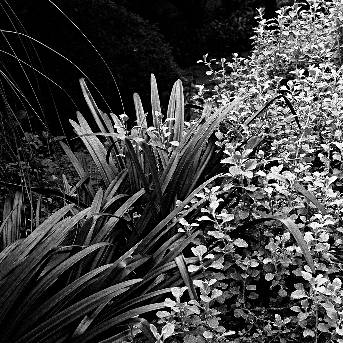 Garden Plant No. 3