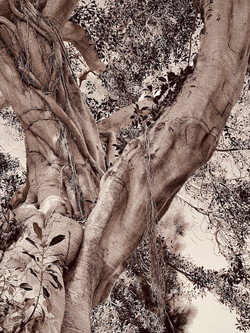 The Poetry of Trees, #3