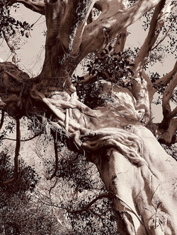 The Poetry of Trees, #2