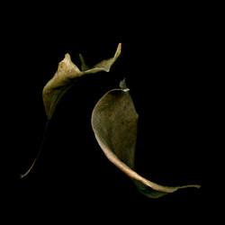 Leaf Duet, Care