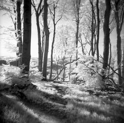 Die Lichtung / The Glade