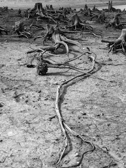 Dead Forest No. 4