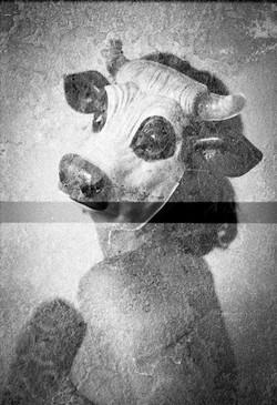 Family Portrait - The Cow