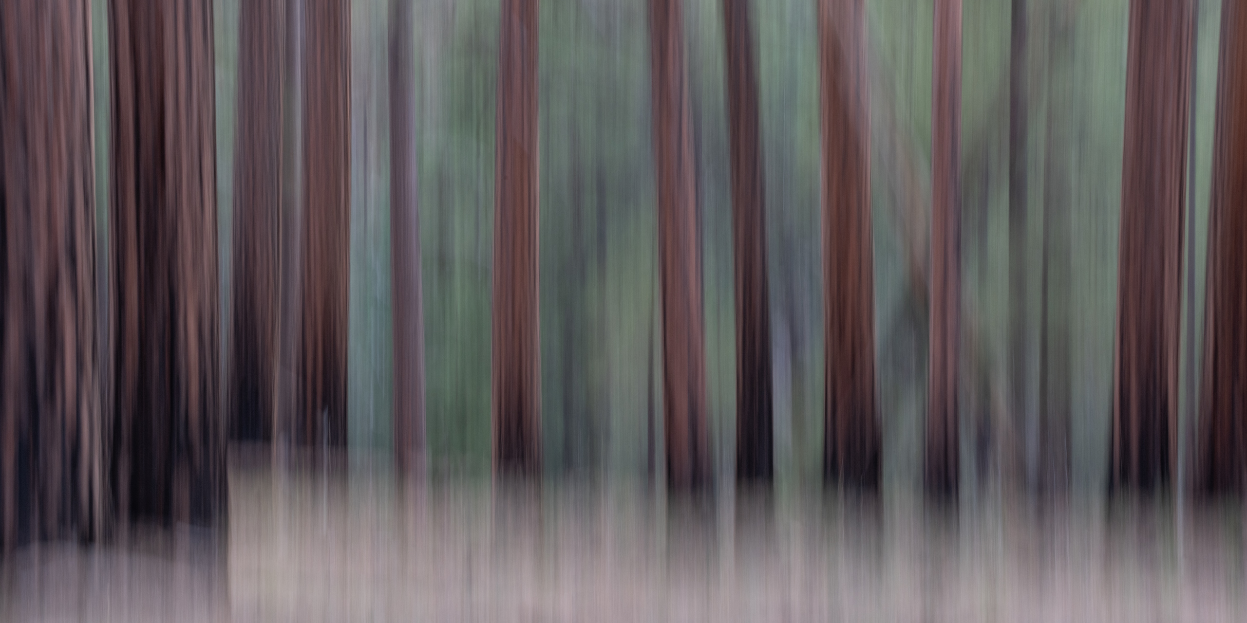Into the Forest No. 1