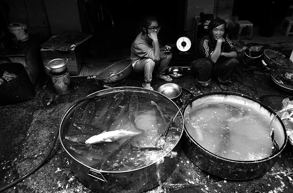 Hanoi Fish Market