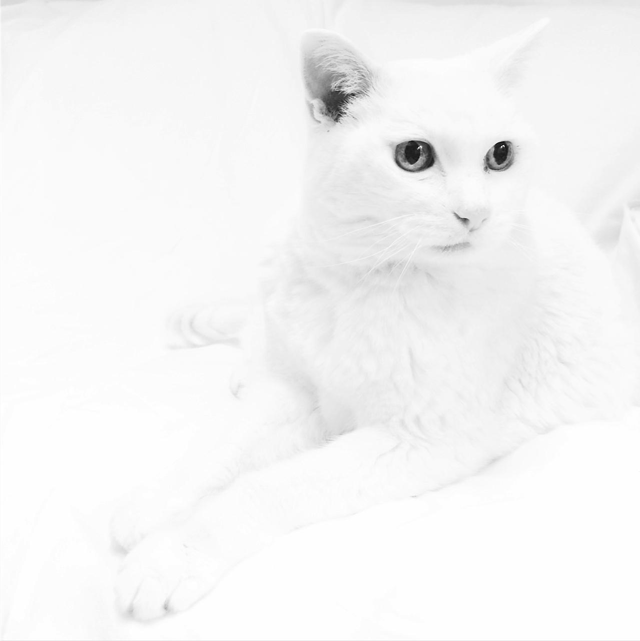White No. 2