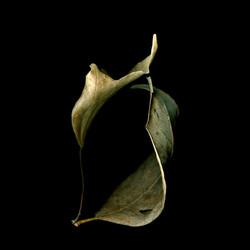 Leaf Duet, Love