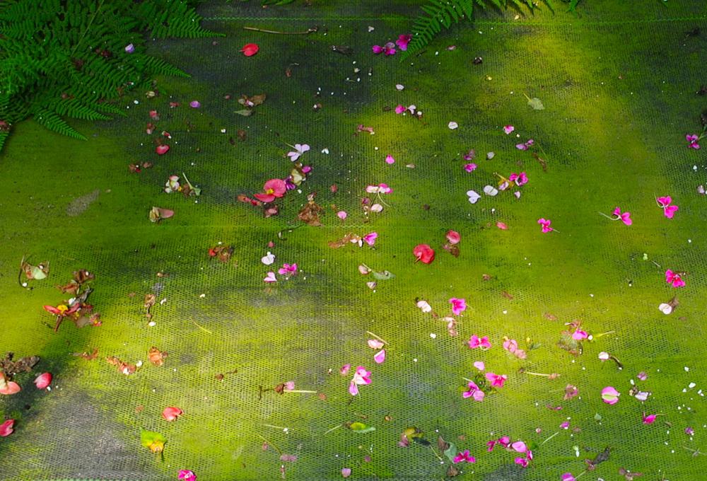 Pink Fern Petals