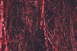 Blood No. 5