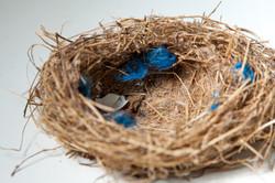 Nest #3
