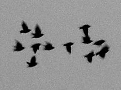12 birds