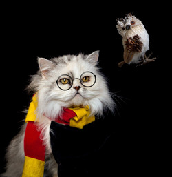 Penny as Potter