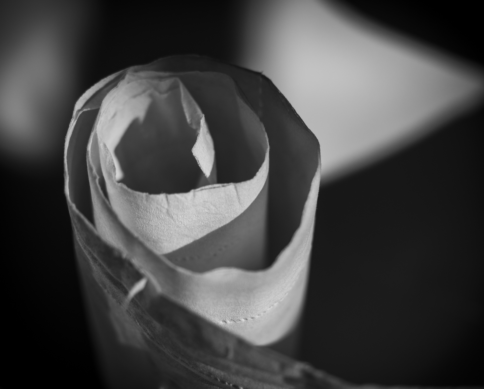 The sudden beauty of toilet paper