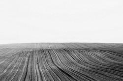 Waves of Landscape