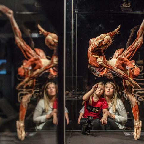 Body-Worlds_visitors-ballet-P0A9740.jpg