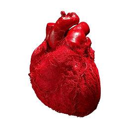 BV_Heart_01.jpg