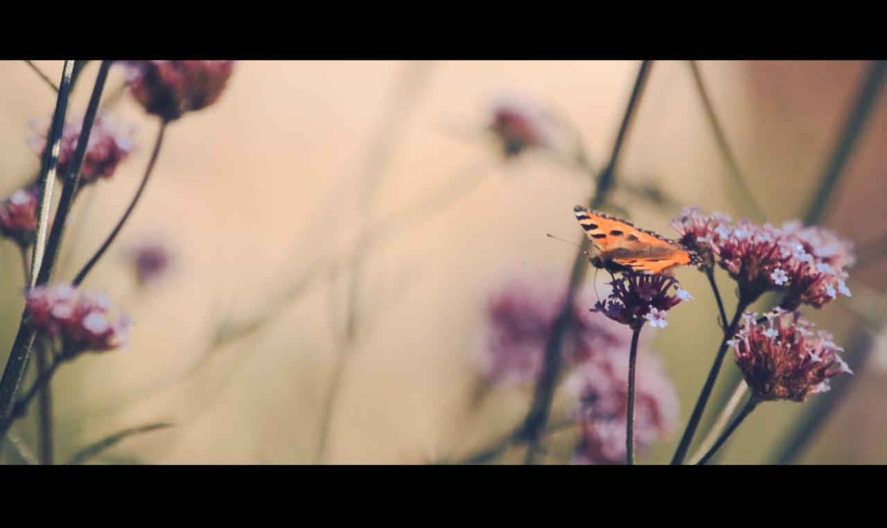 Screen Shot 2015-10-22 at 15.15.50