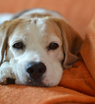 Pet Stain Pet Odor Cleaning