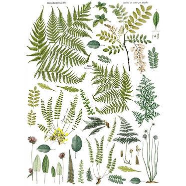 Fronds Botanical
