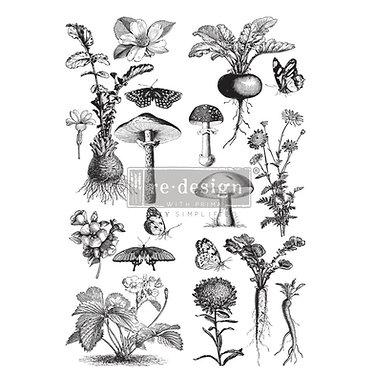 Fungi Forest transfert Prima Redesign