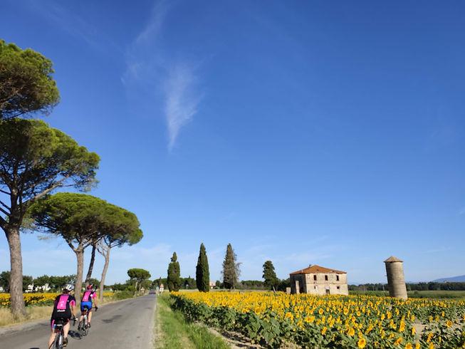 Cyclists and sunflowers.jpg