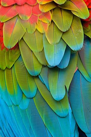 Feathers_edited.jpg