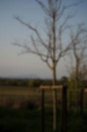 plantation jeune arbre comment planter u