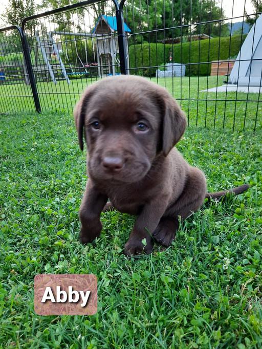 Abby.jpeg