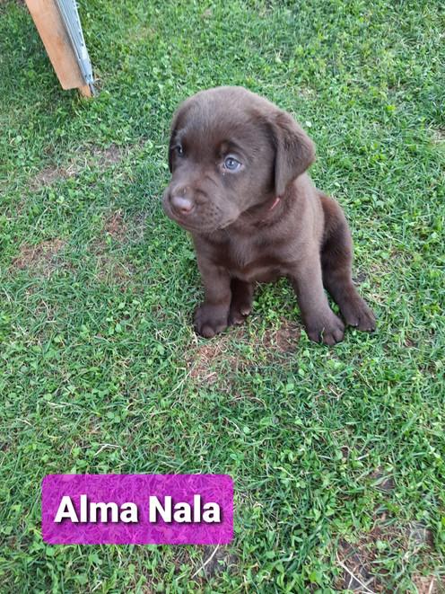 Alma Nala.jpeg