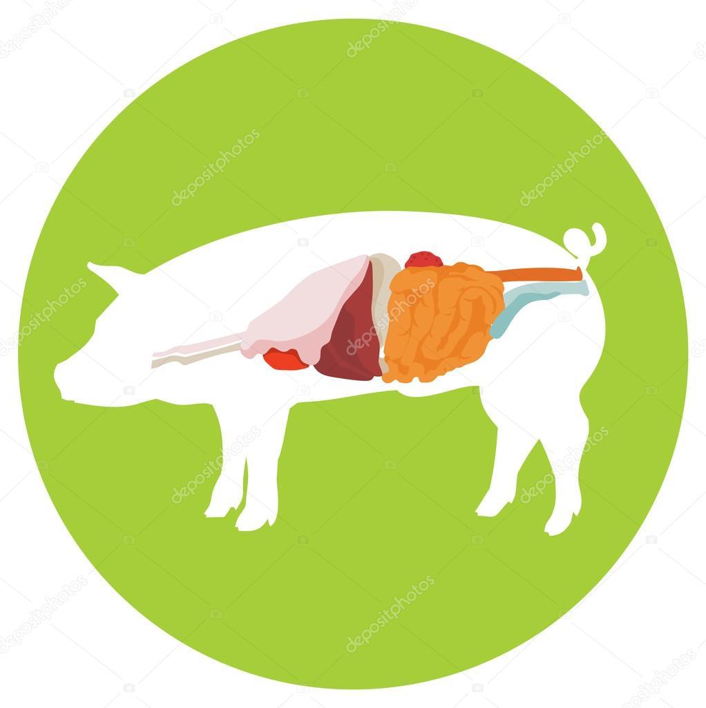 Piglet Gut Health