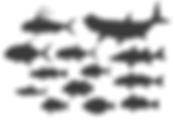 Fish12_bewerkt.png
