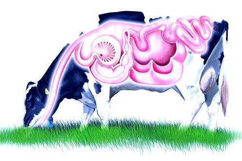 Eco Feed Cow Gut Balance