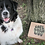 Thumbnail: BOÎTE Lulu à mâcher- Grand chien