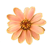 flower-png-30.png