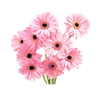 daisy-clipart-aesthetic-3.png