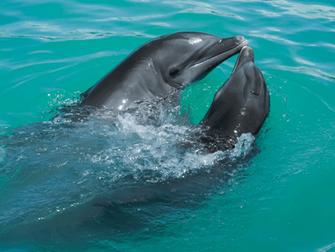 המדע מוכיח כי דולפינים מתקשרים בהולוגרפיה