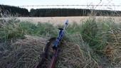 Evening Stalk