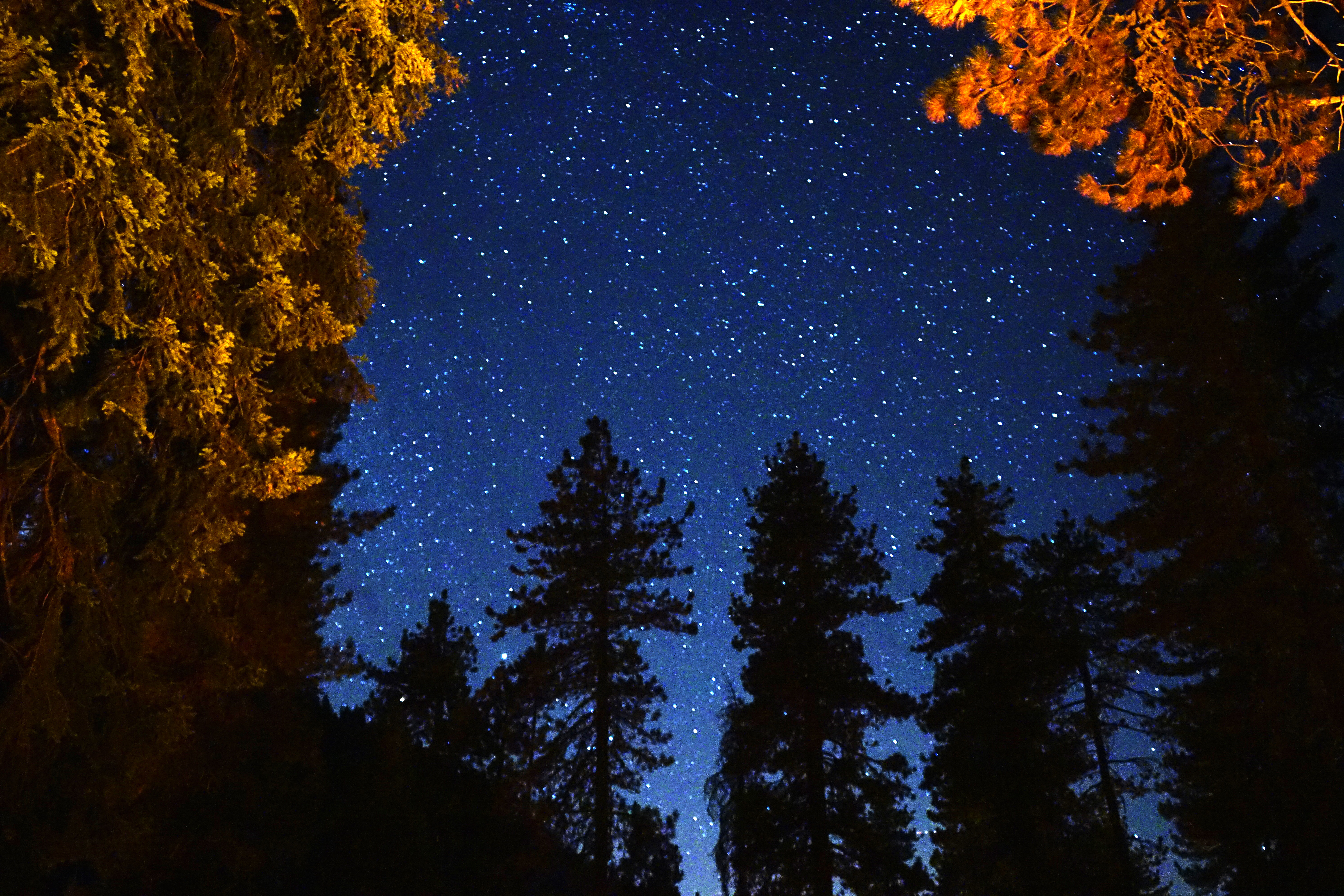 Sequoia National Park at Night