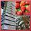 Thumbnail: One Dozen Chocolate-Dipped Strawberries