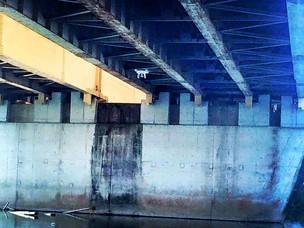 NEXCO西日本とドローン橋梁点検実験