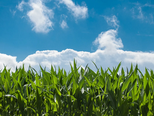 熊本県初のsora:shareスポットは、農地!